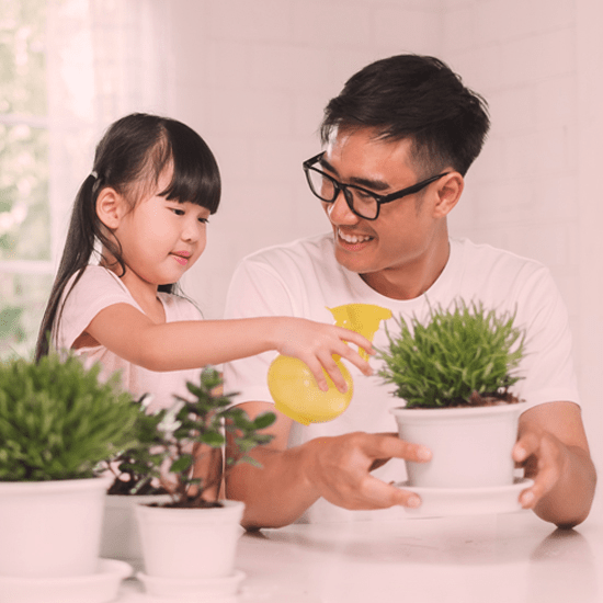8 tips for caring for houseplants